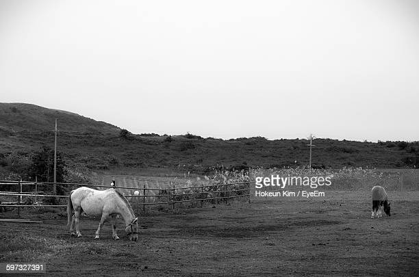 Horses Grazing In Pen Against Clear Sky