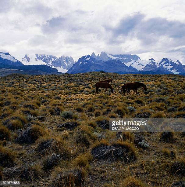 Horses grazing in the semidesert steppe near Viedma Lake with Mount Fitz Roy in the background Patagonia Argentina