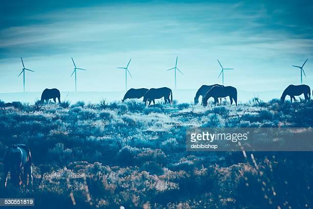 Cavalli al pascolo in inverno paesaggio pittoresco & Turbina a vento sfondo