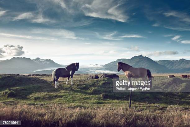 Horses Grazing On Field Against Sky