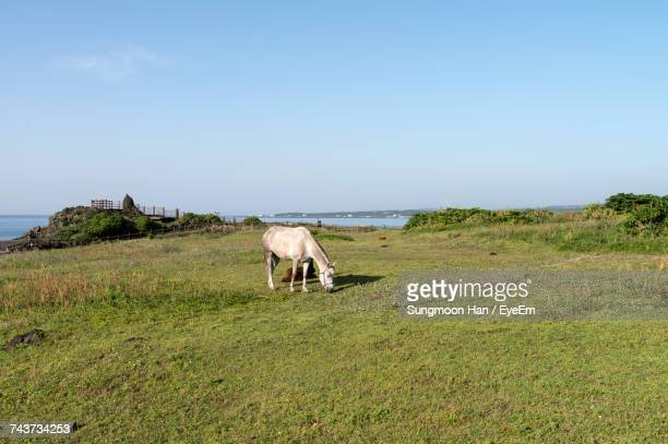 Horses Grazing On Grassy Field Against Clear Sky During Sunny Day