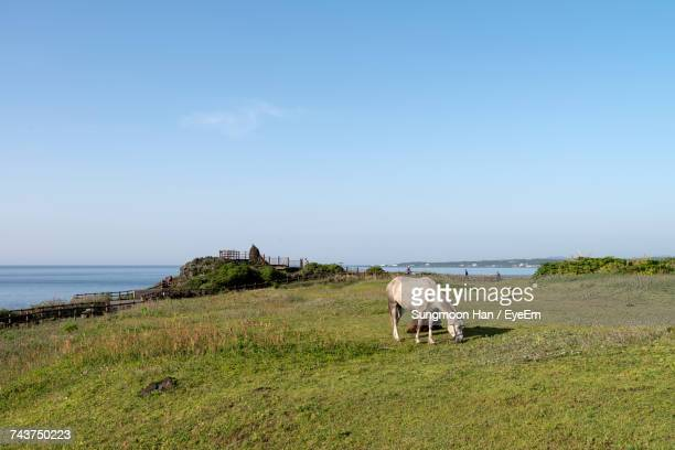 Horses Grazing On Grassy Field By Sea Against Blue Sky