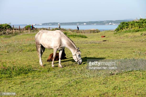 Horses Grazing On Grassy Field By Sea Against Clear Sky