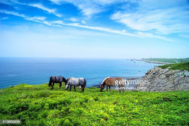 Horses grazing on landscape against calm blue sea