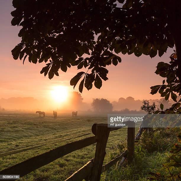 Pferde Grasen auf der Wiese auf einem nebligen Morgen