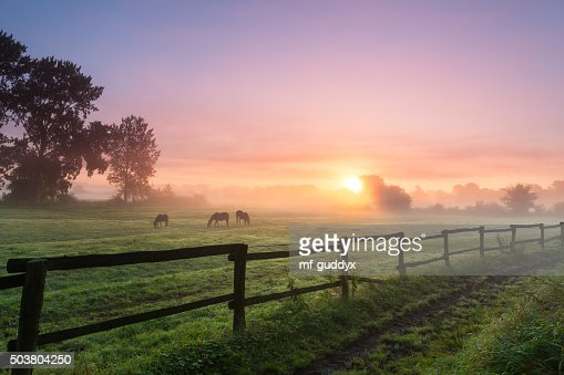 Horses grazing the grass on a foggy morning