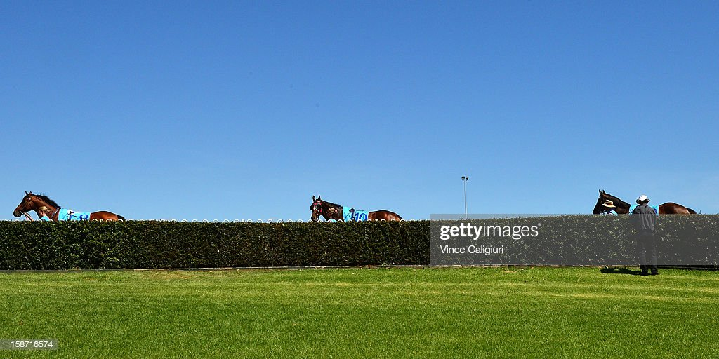 Horses heading into the mounting yard during Caulfield races at Caulfield Racecourse on December 26, 2012 in Melbourne, Australia.