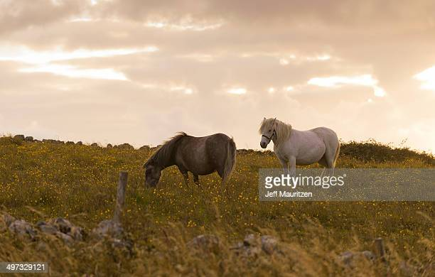 Horses in a field at sunset.