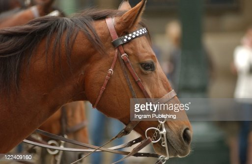 Horses in a row in Chicago : Foto de stock