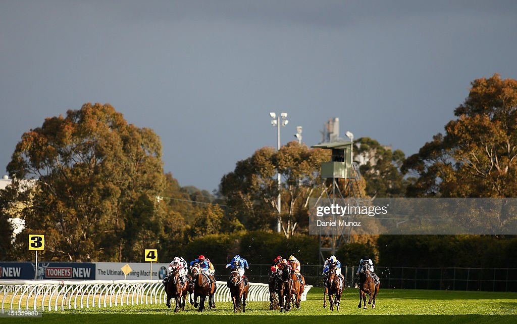 Horses in action in Race 7 'Premier's Cup' during Sydney Racing at Rosehill Gardens on August 30, 2014 in Sydney, Australia.