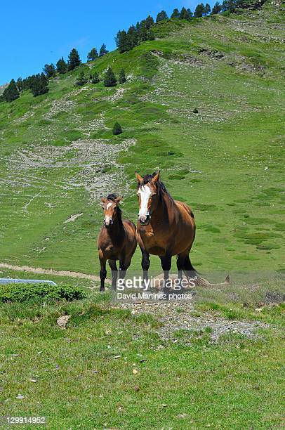 Horses in Aigues Tortes National Park.