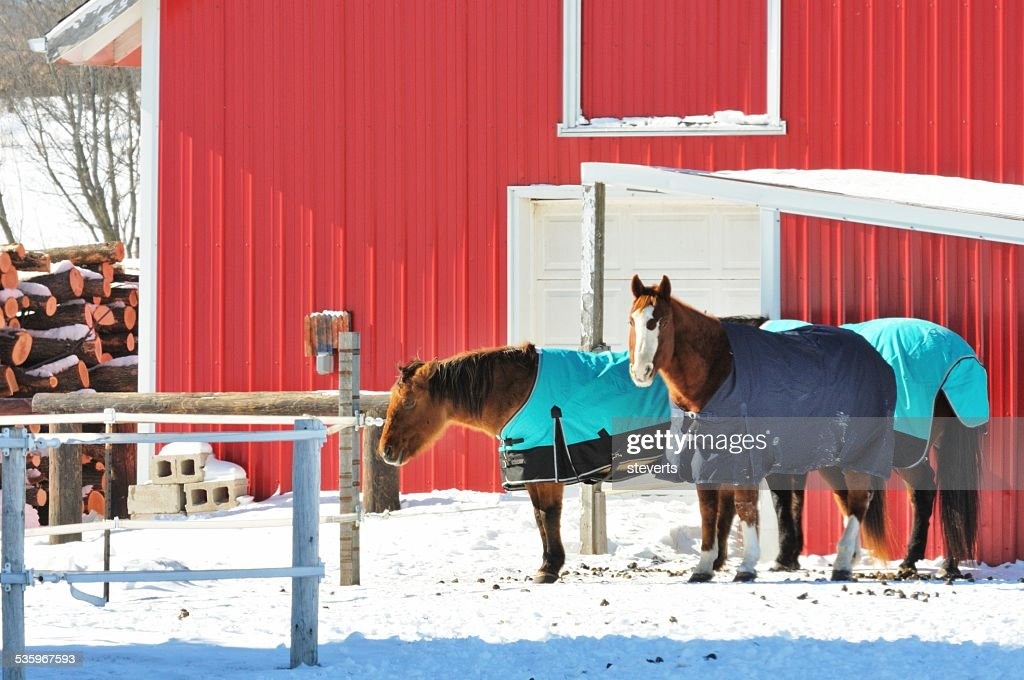 Horses in Blankets : Stock Photo