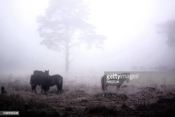 Pferde in Nebel