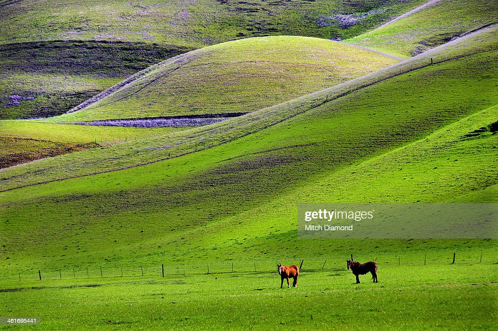horses in hill country : Stock Photo