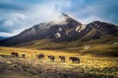 Horses in Leba gorge, TIbet