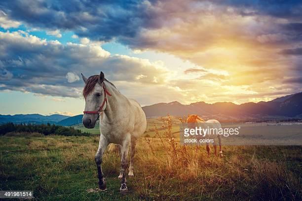 Cavalos na natureza