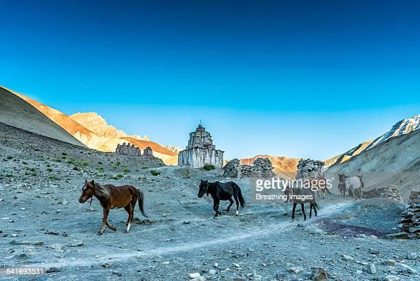 Horses in Rumbak