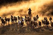 Horses In Vast Grassland