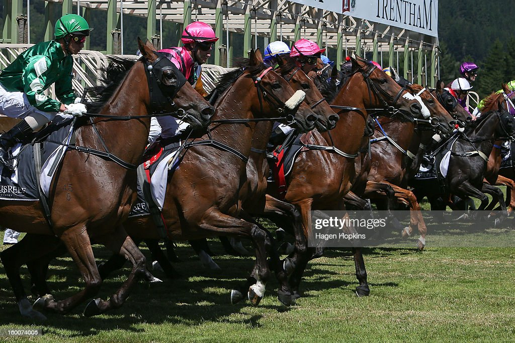 Horses jump out of the gate in the 2400m Virginia Turner Summer Cup during Wellington Cup Day at Trentham Racecourse on January 26, 2013 in Wellington, New Zealand.