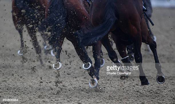 Horses kick up the AllWeather track at Lingfield Park on October 29 2015 in Lingfield England