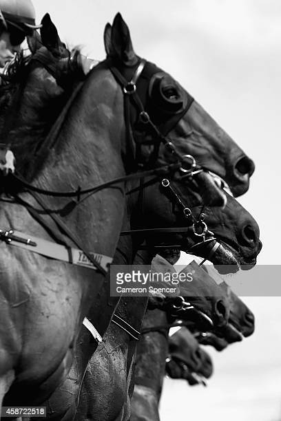 Horses leave the starting gate during a sprint race on Victoria Derby Day at Flemington Racecourse on November 1 2014 in Melbourne Australia
