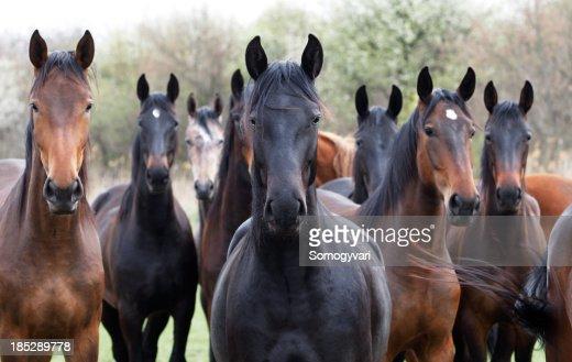 Cavalli guarda alla macchina fotografica