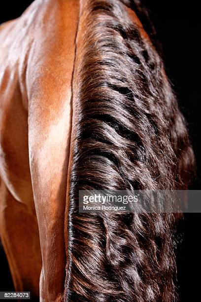 Horse's Neck and Back