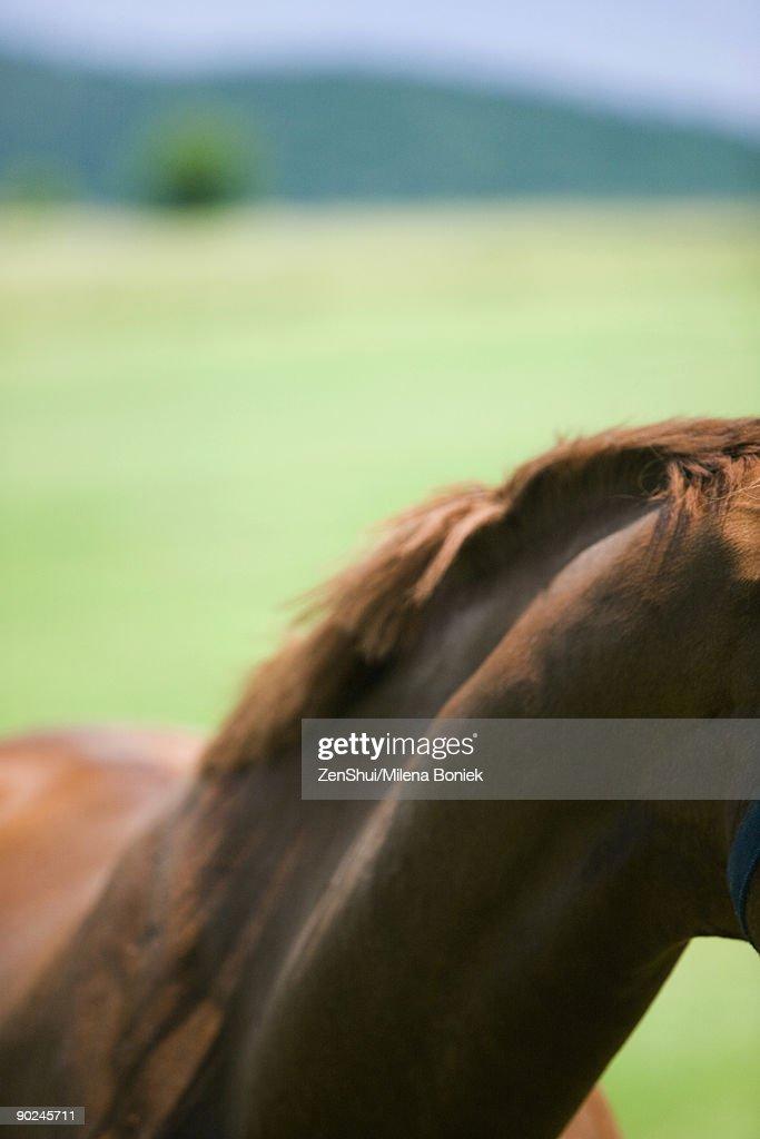 Horse's neck, close-up : Stock Photo