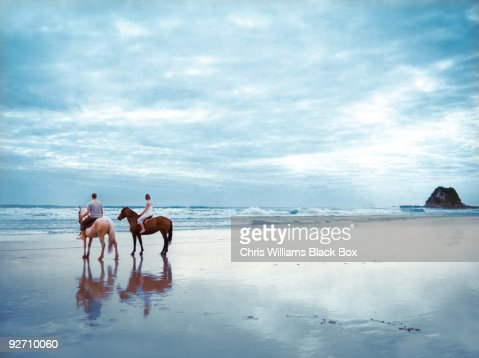 Horses on a beach in New Zealand. : Photo