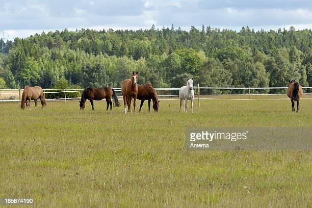 Pferde auf ein Sommer-camp
