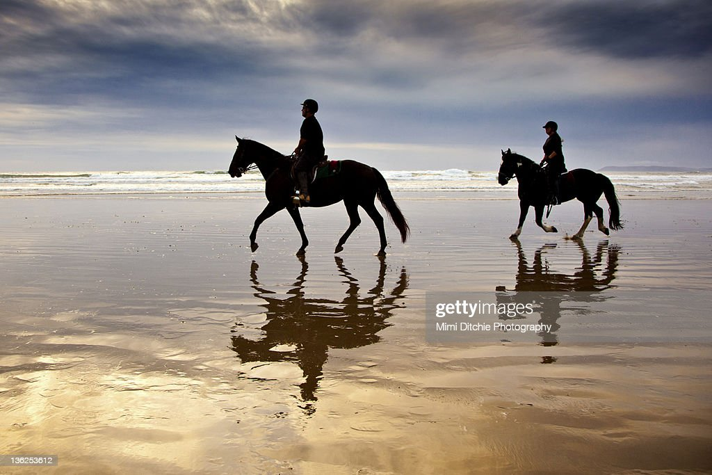 Horses on  beach : Stock Photo