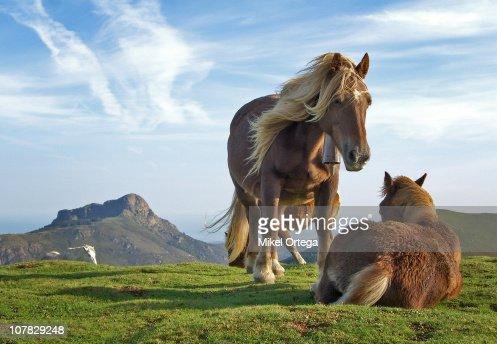 Horses on Bianditz mountain, in Navarre, Spain. : Foto de stock