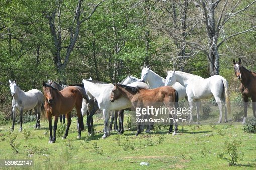 Horses On Grassy Field Against Trees