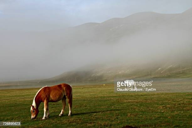 Horses On Landscape Against Sky