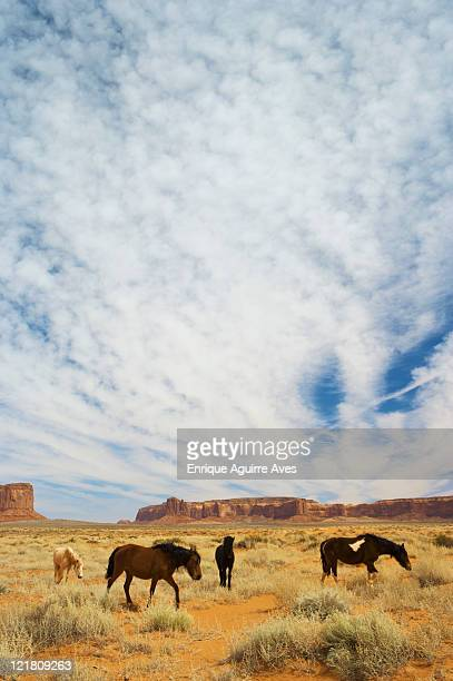 Horses (Equus caballus) on Navajo land, Monument Valley, Arizona