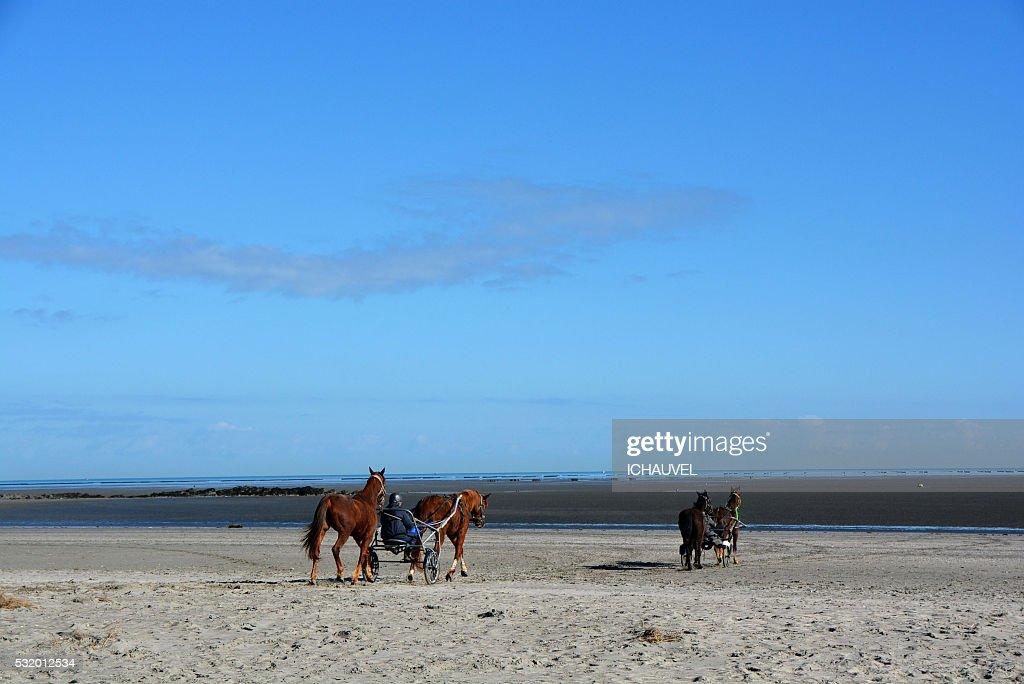 horses on the beach France