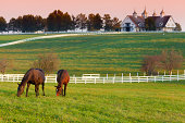 Horses grazing in the pasture at a horse farm in Kentucky