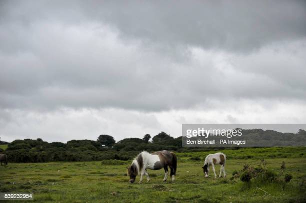 Horses on the moors near Bodmin As the rest of the UK basks in glorious sunshine and soaring temperatures Bodmin and the surrounding Cornish...