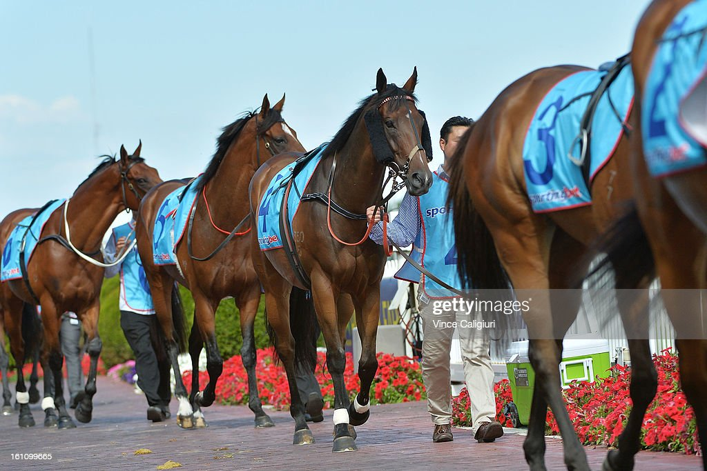 Horses parading in the mounting yard before the Sportingbet C.F.Orr Stakes during Melbourne Racing at Caulfield Racecourse on February 9, 2013 in Melbourne, Australia.