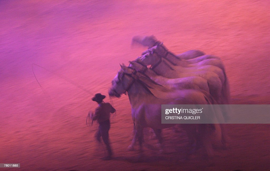 Horses perform during a rehearsal at Sicab, the International Horse Show of Spain, 20 November 2007 in Seville. The annual show for purebreeds showcases over 1,200 specimens from 124 known breeding farms from 20 November till 25 November.