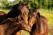 Family of horses showing love