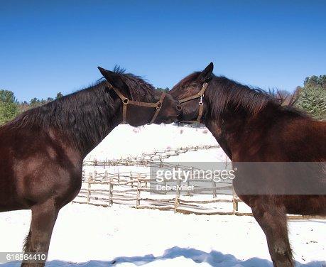 horses : Stock Photo