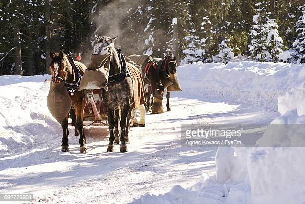 Horses Pulling Cart In Snow
