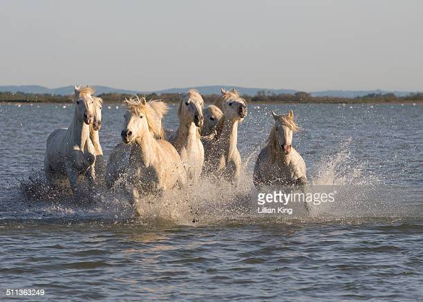 Horses racing in the sea