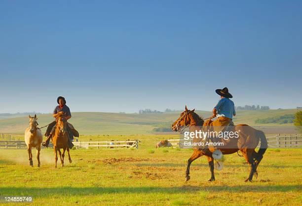 Horses riding mans