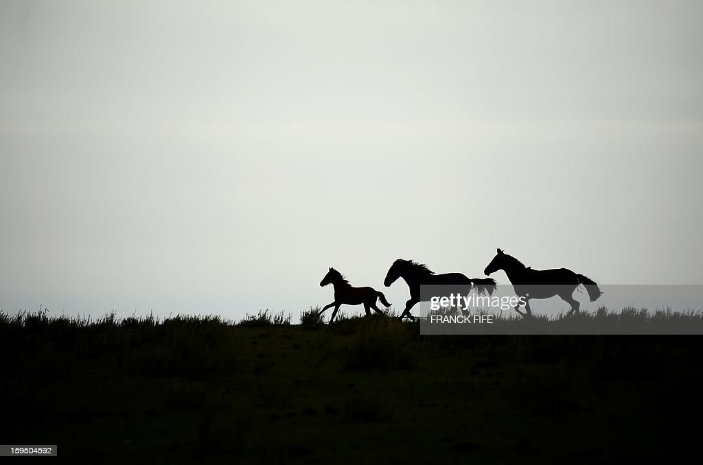 Horses run during the Stage 9 of the Dakar 2013 between Tucuman and Cordoba, Argentina, on January 14, 2013. The rally takes place in Peru, Argentina and Chile between January 5 and 20.