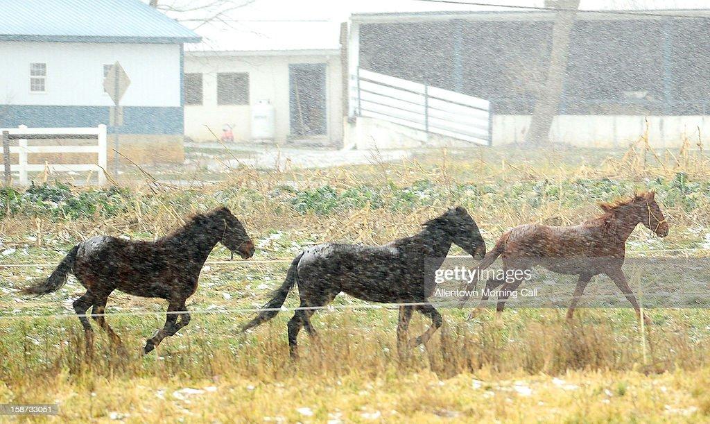 Horses run through a field in Maxatawny Township, Pennsylvania on Wednesday, December 26, 2012.
