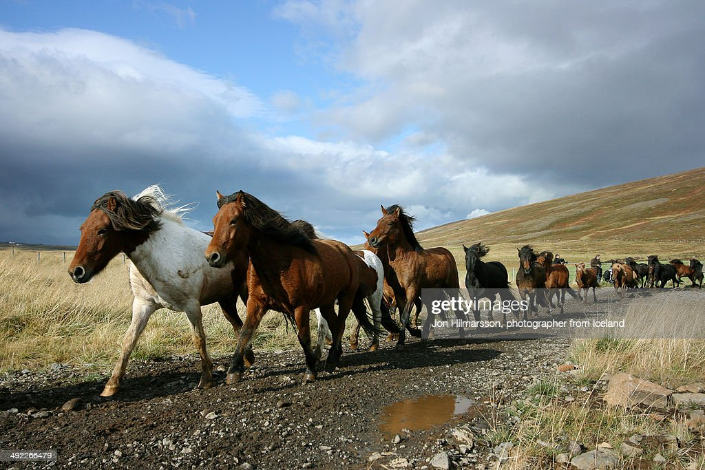 Horses running down the mountain