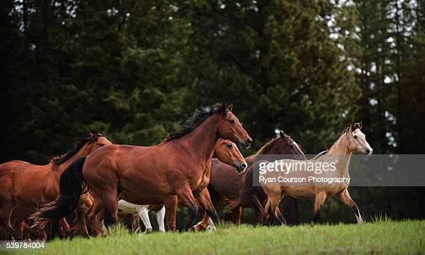 Horses running in a field