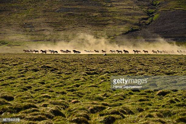 Horses running in dust